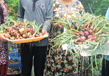 Chandran's family in Kozhikode got around 18 kg of Onions by terrace farming