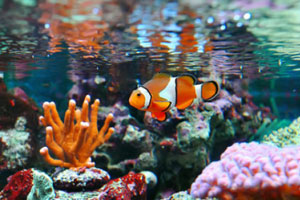 Wanted Ban On Aquarium Trade Social Issue Social Issue Social