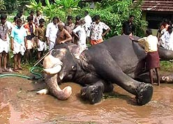 A total of 106 cases of jumbo deaths have been reported across the state