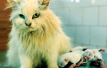 This Persian breed cat was bought by P K Abbas a year back for Rs 24,000 a pair