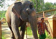 Kodanad is one of the largest elephant training centres in Kerala.
