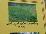 Muttar Koythulsavam